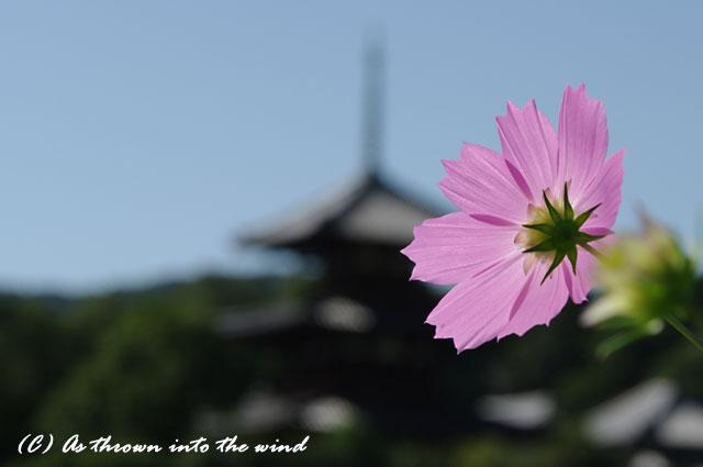奈良 法起寺4