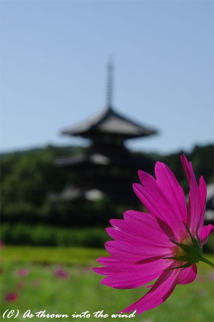 奈良 法起寺5