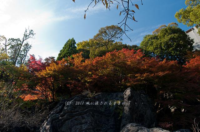 滋賀・石山寺 硅灰石の紅葉2