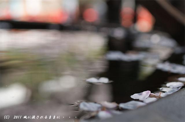 和歌山・紀三井寺 水甕の中の花びら
