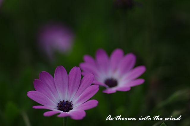長居植物園 春の花1