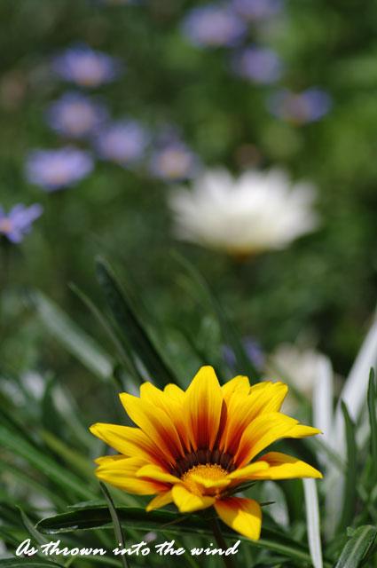 長居植物園 春の花2