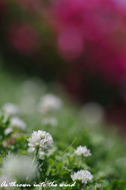 長居植物園 春の花3