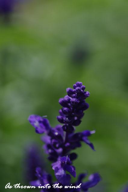 長居植物園 春の花4
