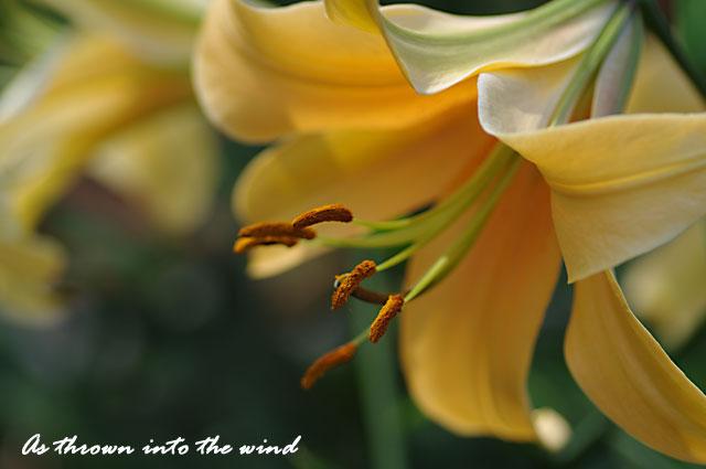 花の文化園 オラニア2
