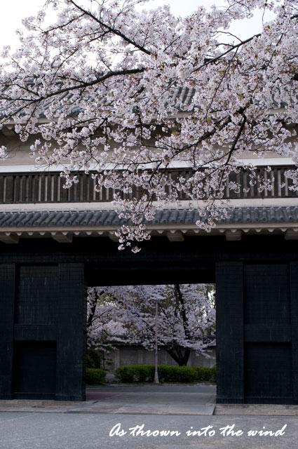 大阪城 多聞櫓の桜1