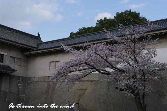 大阪城 多聞櫓の桜2