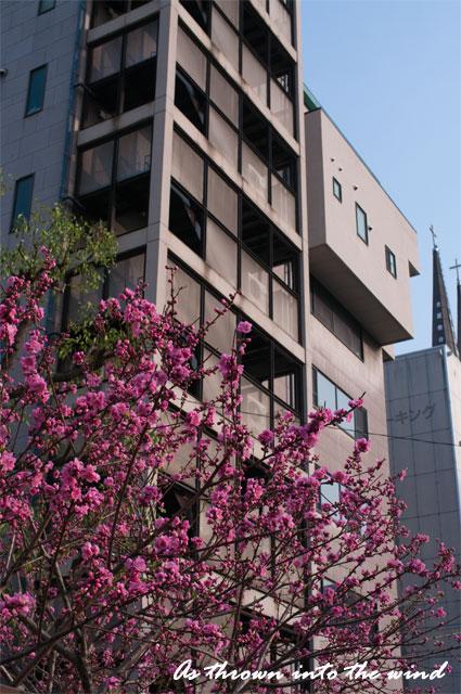 大阪の街 梅