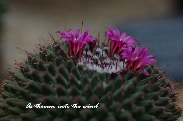 大阪・ 咲くやこの花館 サボテンの花