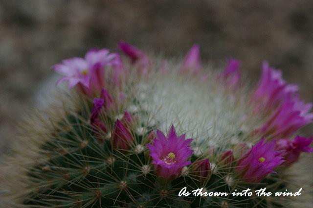 大阪・ 咲くやこの花館 サボテンの花2