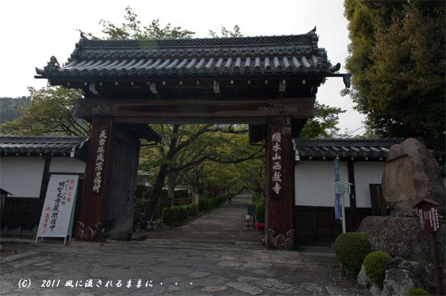 滋賀 西教寺1