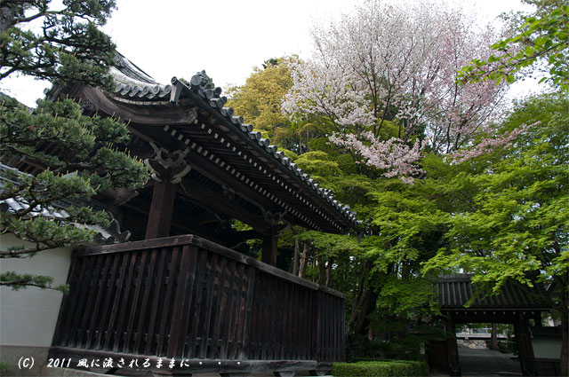 滋賀 西教寺3