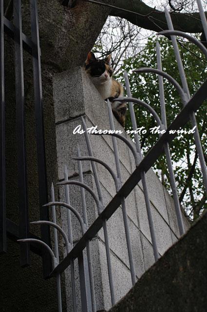 塀の上のネコ