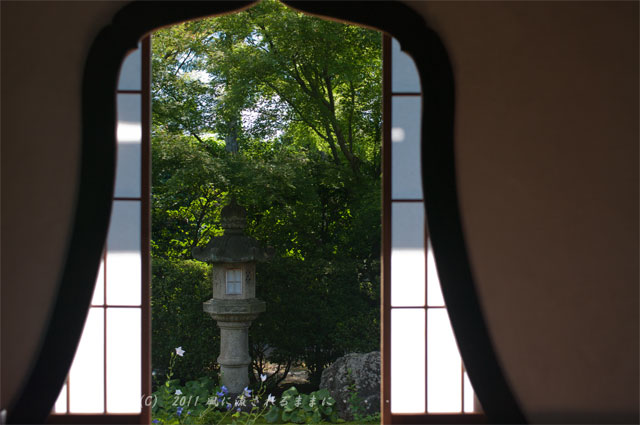京都・天得院 桔梗の花3
