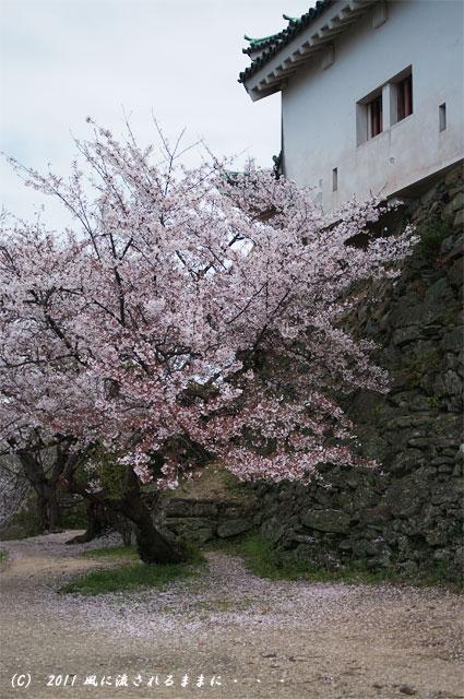 和歌山城・桜1