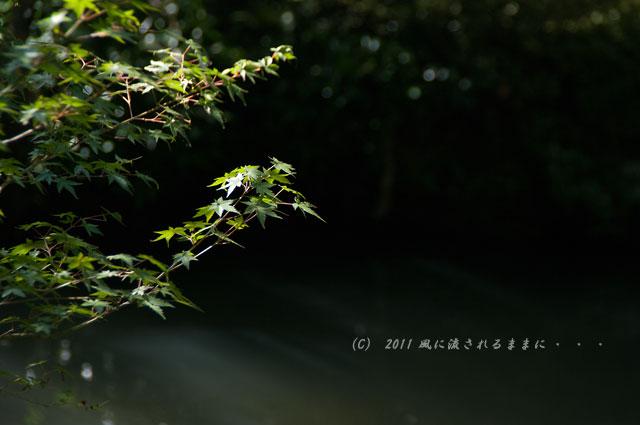 京都・実相院 庭園2