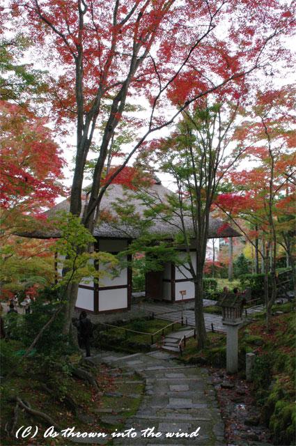 京都・常寂光寺 紅葉10