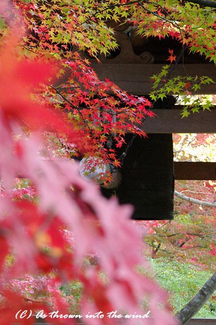 京都・常寂光寺 紅葉11