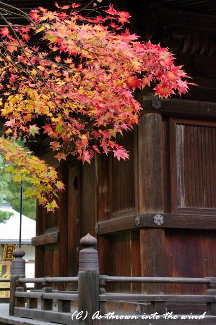 京都・常寂光寺 紅葉7