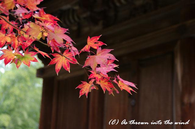 京都・常寂光寺 紅葉8