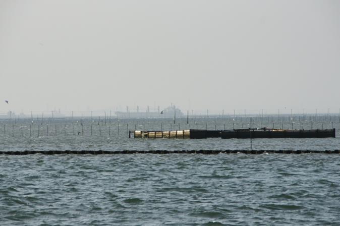 DSC00180海苔