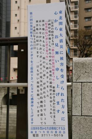 DSC01358目黒川桜