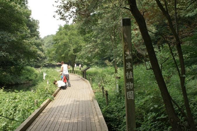 DSC04979東高根森林公園0919