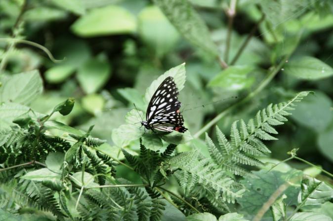 DSC05033蜘蛛の巣蝶々