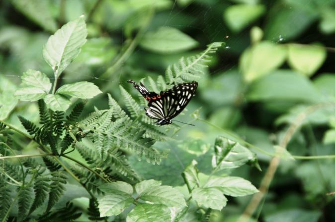 DSC05019蜘蛛の巣蝶々