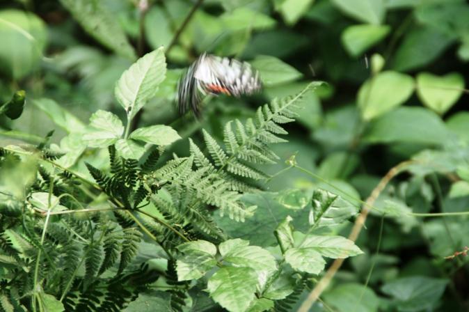DSC05009蜘蛛の巣蝶々