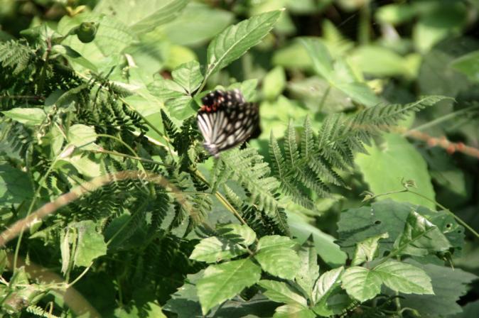 DSC05004蜘蛛の巣蝶々