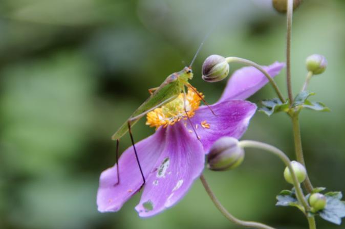 DSC06171花と昆虫