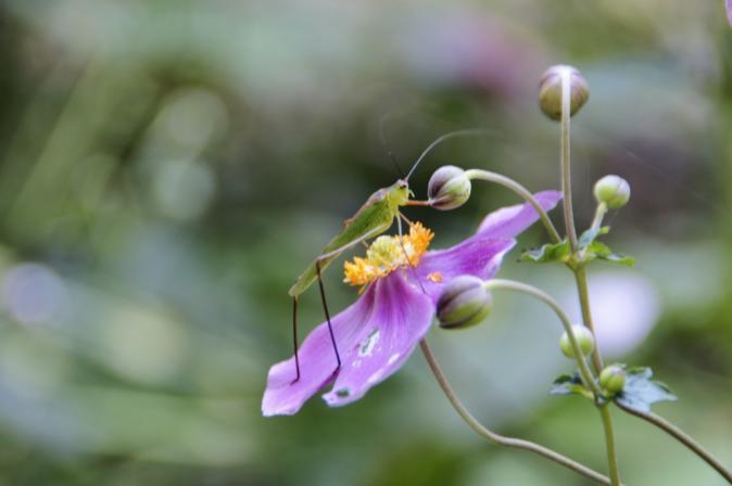 DSC06167花と昆虫