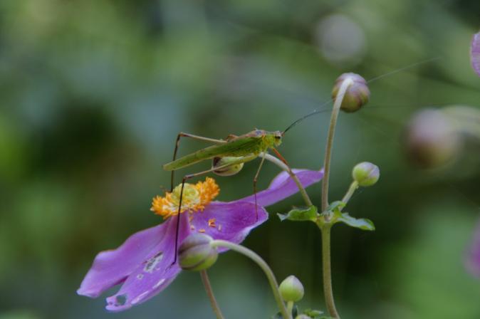 DSC06197花と昆虫