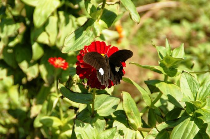 DSC06560赤と黒