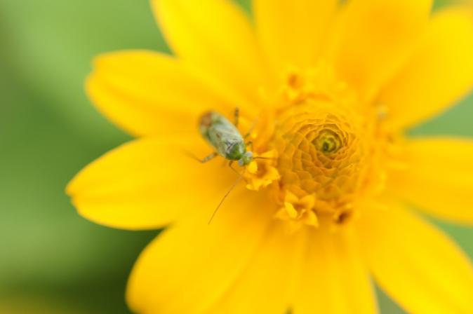 DSC07320花と昆虫