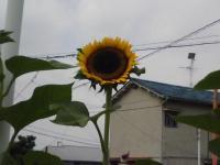 J0010004_20100807152251.jpg