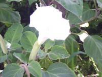 J0010025_20100807152748.jpg
