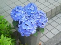 J0010030_20100518141609.jpg