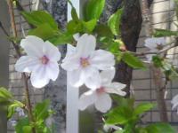 J0010034_20110420121012.jpg