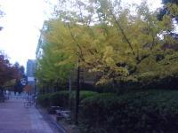J0010036_20101115132245.jpg