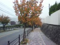 J0010038_20101115132328.jpg