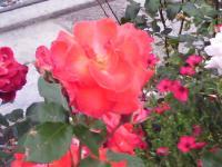 J0010064_20100524093453.jpg