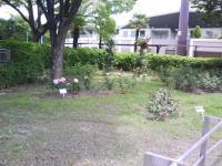 J0010065_20110525140423.jpg