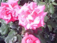 J0010115_20110519141318.jpg