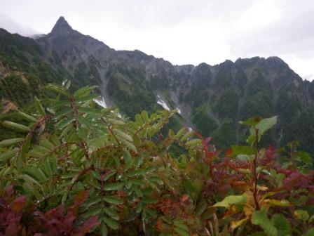 西岳014