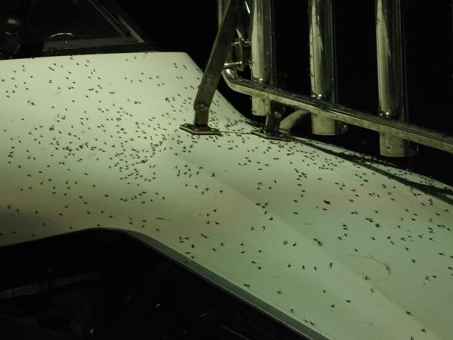 恐ろしい数の虫