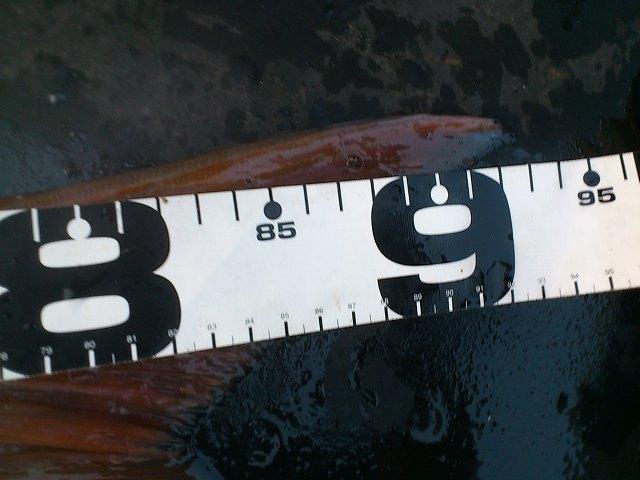 93センチ