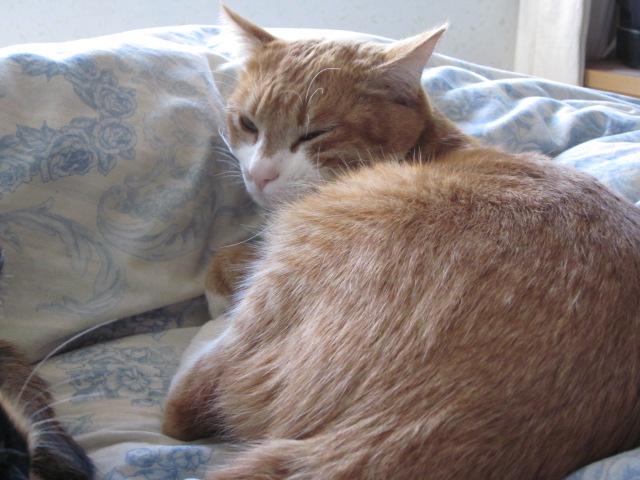 【獣医師監修】猫の毛並みが悪いときの原因と改善 …