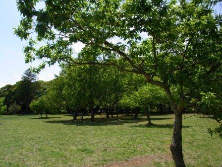 北総花の丘公園 (2)